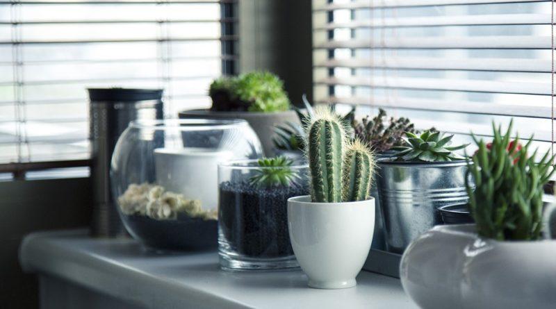 péče o kaktusy