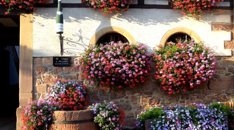 Květiny na parapet